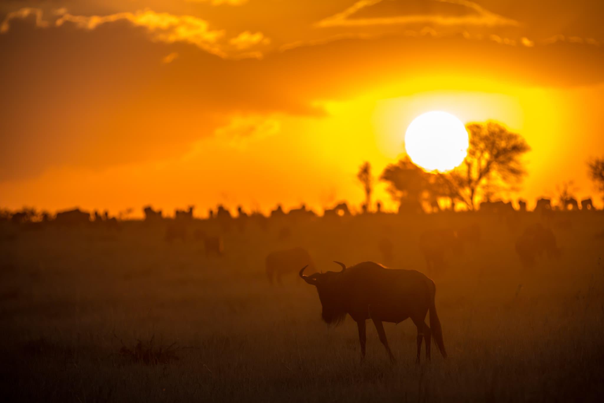 Tanzânia - Vida Selvagem